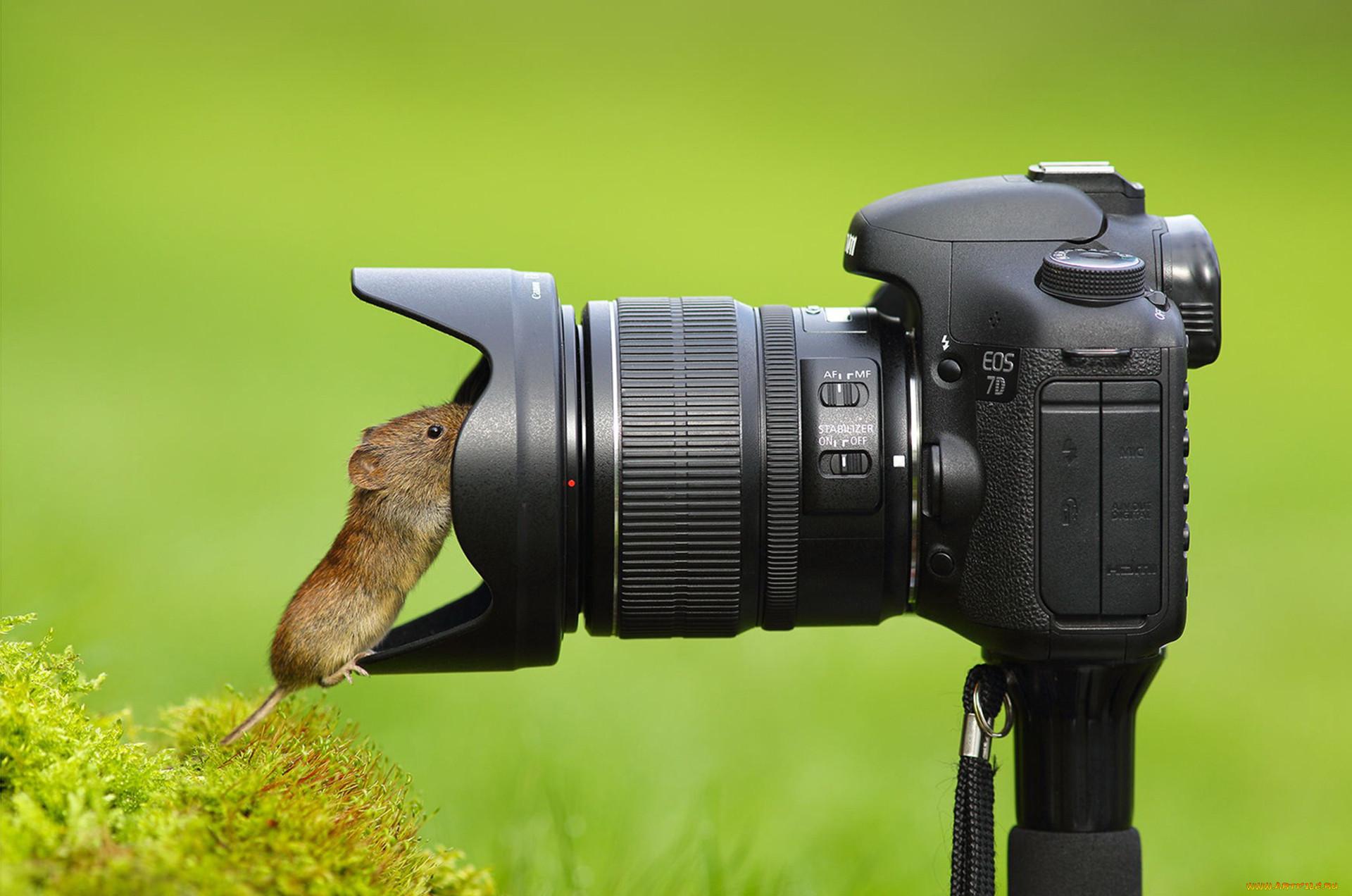 живёте курсы фотографии животных что есть